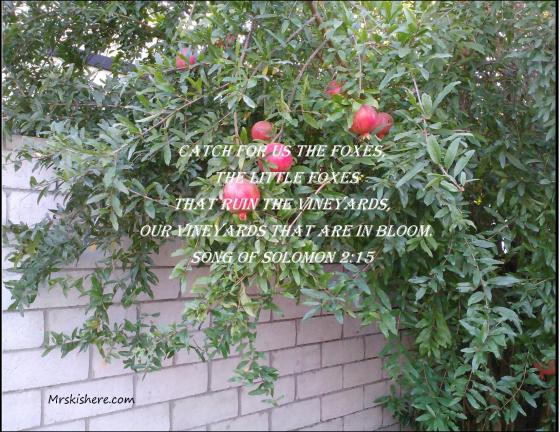 Pom Tree Poster